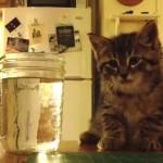 子猫「お水飲もうかな・・・でもねむい・・・」