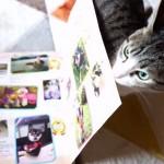 なんで猫じゃないにゃ!!犬の情報誌を読ませない猫