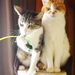 オモチャに対する反応が正反対な2匹の猫