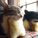 食パンをふかふかに焼いてくれる仲良し猫トースター
