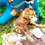 キタキタキター!!釣った魚を猛烈な勢いでフライングゲットする猫