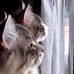 「あれは?」「何かにゃ?」「鳥かにゃ?」デュエットしてるみたいに鳴く二匹の猫