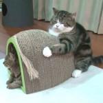 斬新!!爪とぎをがっちり抱える猫