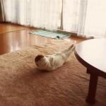 猫が筋トレ!?早朝のリビングで朝トレ中の努力家の決定的瞬間が撮られる!
