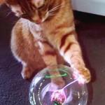 プラズマボールに予想以上に大興奮な猫