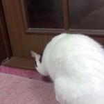 とある猫ちゃんの普通の時・急いでる時・興奮してる時のドアの開け方
