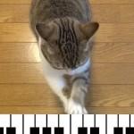 もしも猫が「エリーゼのために」を弾けたにゃら・・
