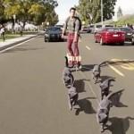 5匹の猫と颯爽と走るイケメンがシュールすぎる