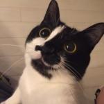 「ハムをおねだりする顔」と「もらえなかった時の顔」のギャップがありすぎる猫