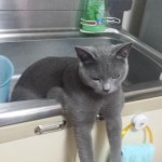 キッチンシンクから「こんにちは」恐ろしあんぶるーな妖怪猫が出現!?