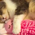 人形を抱きしめて眠るにゃんこにめっちゃ癒される!!