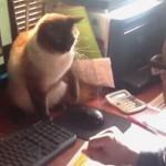飼い主「仕事させて!!」パソコンのマウスを死守する猫