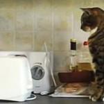 にゃんだこれ!?トースターに驚いた猫たちによる爆笑動画集