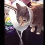 エリザベスカラーを利用して水を飲む方法を見つけた猫