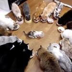「新天地でもしあわせになれにゃ!」みんなで囲む最後の晩餐