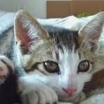 超やわらか!ストレッチをしながら眠る子猫