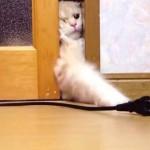 ドアの隙間からコードへ必死に手を伸ばす猫
