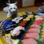ご飯はまだかにゃー!?猫の「メシくれ顔選手権」20選