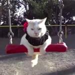 ブランコに乗る猫!!おじいちゃんとの名コンビに癒される