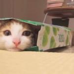 お気に入りスポットにゃ!!子猫がティッシュの箱にすっぽり
