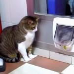 ここは通さないにゃ!!帰宅したい猫とそれを阻止する猫の熱きバトル