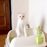 猫なのに猫背じゃない!二足立ちをしながら凛々しくトイレを済ませる子猫