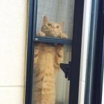 そちらの世界に行きたいにゃ!ベランダ越しの飼い主さんを不思議そうに見つめる猫に胸キュン!