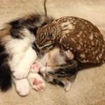 まんまるおめめのフクロウと折れ耳スコの子猫コンビに逢えるカフェ