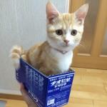 疲れたカラダに、愛情一匹!チオビタドリンク箱の中で愛らしさという栄養を振りまく子猫
