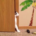 ここは入室禁止!!ひっそりと部屋に入るも捕まってしまう猫