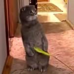 誰か来たにゃ!!ピンポンが鳴るとねこじゃらしそっちのけになる猫