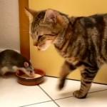 猫とネズミのミルク争奪戦!絶対に負けられない戦いがそこにはある