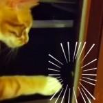 カメムシに猫パンチをして、お返しにくさ〜い一発をもらったニャンコ