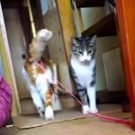 猫界の紳士現る!「これ、落としましたよ」と届けてくれるニャンコ
