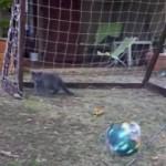 ここは絶対守るにゃ!ゴールを許さずにボールをセーブし続ける猫