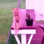 こんな座り方見たことない!と思わず突っ込んでしまいたくなるほど乙女な座り方をする猫