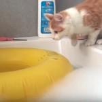 泡風呂にドボン!!興味津々で飛び込んで慌てて逃げ出す猫