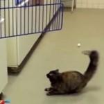 全然飛べないにゃ・・!ワックスがかけられた床でもめげずにケージへジャンプする猫