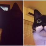 こんなの見たことにゃい!ピタゴラスイッチに夢中になるまん丸おめめの白黒猫