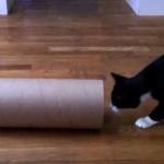 ねこまっしぐら!!猛ダッシュで細い筒に入り込む器用な猫