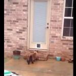 飼い主「新しく猫用のドアを作ったよ!!」まさかの猫のリアクションが話題に