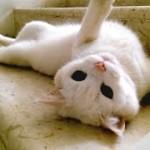 流れる水のように階段をすべり降りる猫たちの動画集!!