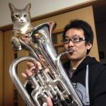 なぜこんなところに!?楽器の穴の中でリラックスする猫