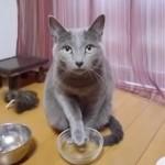 すっとぼけてもう一回ご飯をもらおうとしたら、他のネコにツッコミを入れられた件