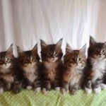 子猫の兄弟が見せる、首振りダンスのシンクロ具合がステキすぎる