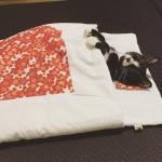 心も体もぽっかぽか!寒い季節はにゃんこ専用のキュートな猫布団でおやすみにゃさーい
