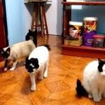 だるまさんが転んだ!?奇妙な音に誘われてコマ送りのような動きをする猫たち