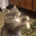 飼い主の歌に合わせて踊るネコが最高にキュート