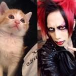 母性溢れる子育て!!ヴィジュアル系バンドマン×子猫の異色コンビの幸せな毎日に癒される