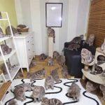 猫好きの妄想を実現した結果がシュールすぎる!もしも我が家に37匹の猫がいたなら・・